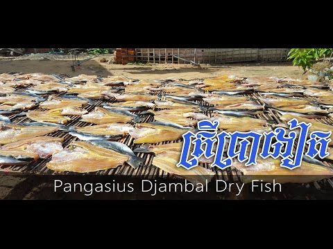 Khmer Dried Fish - How to make a dry fish - Pangasius Djambal Dry Fish in Cambodia