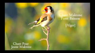 Chant Maknine Foret Bainem Sans Repétion Bien Mixy
