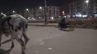 NANA Cattle 2018 || Karachi Cow Mandi 2018 Latest  || #mandi2018 #karachimandi