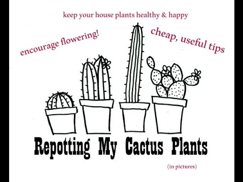 Easy Cactus/Succulent Repotting