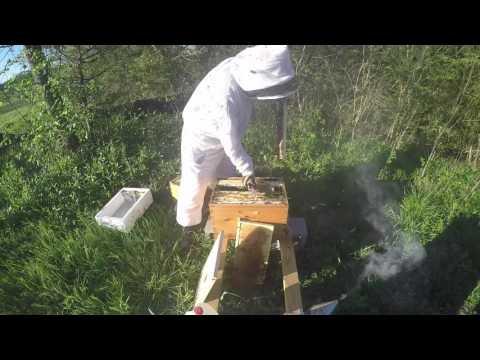 Dedant Beekeeping Supplies: Awesome Customer Service - Honey