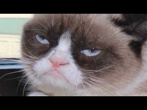 Grumpy Cat goes from meme to the big screen