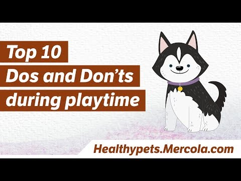 Top 10 Dos and Don'ts During Pet Playtime