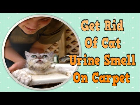 Get Rid Of Cat Urine Smell On Carpet, How To Get Rid Of Cat Spray Odor, How To Get Rid Of A Cat Pee