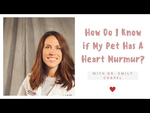 How Do I Know if My Pet Has A Heart Murmur?