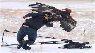Top 7 Best Eagle Attacks (What size of prey can eagles attacks?)