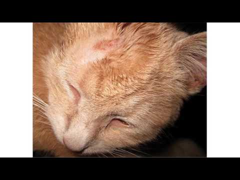 cat ringworm treatment