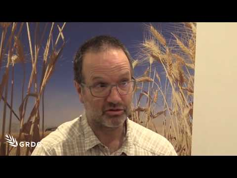 Maarten van Helden, Adelaide GRDC Update answering some 'unknowns' on the Russian wheat aphid