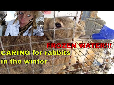 CARING FOR RABBITS IN THE WINTER: WATER NEEDS