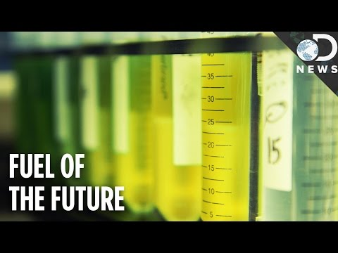 We Can Power The World With Algae!