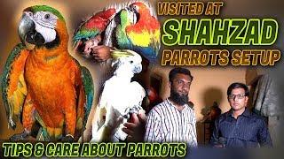 Visited at Tahir birds at New Karachi Over view his shop (Jamshed