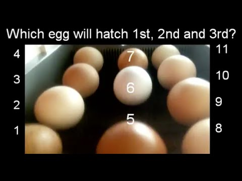 Which egg will hatch first?