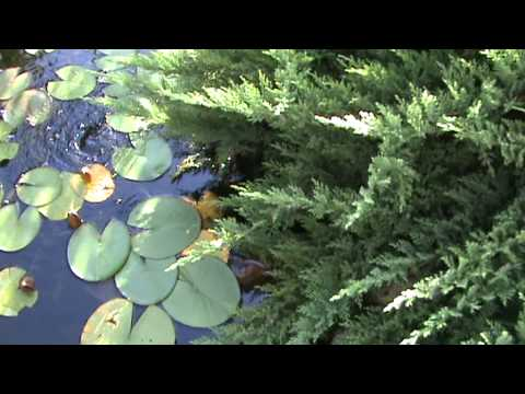 My garden pond - very cheap and easy to make