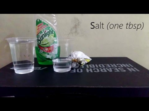Homemade DNA Extraction