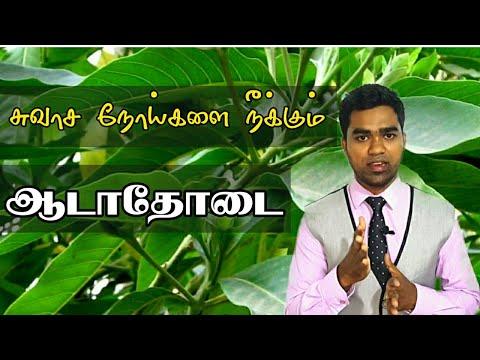சுவாச நோய்களை நீக்கும் ஆடாதோடை மூலிகை | Medicinal use of adhatoda