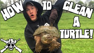 Download How To Clean a Snapping Turtle! Video