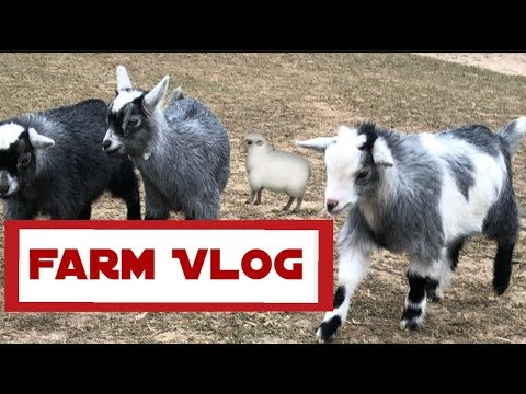Farm VLOG   Cute Animals!