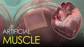 This Artificial Muscle Can Repair Damaged Hearts