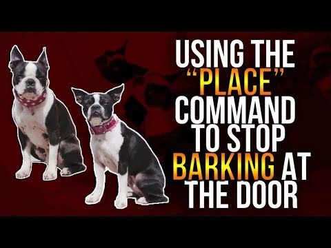 """USING THE """"PLACE"""" COMMAND TO STOP BARKING AT THE DOOR"""