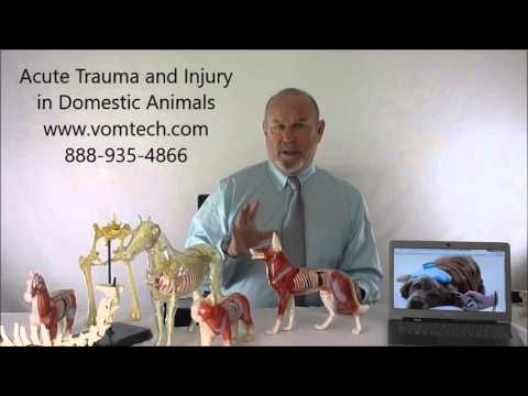 Acute Trauma and Injury in Domestic Animals