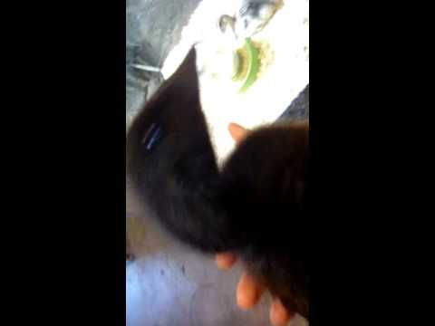 10. Petting the Duckling