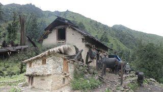Very Relaxing Nepali Mountain Village Life    Best Compilation Videos of Rainy Season🌧️    IamSuman
