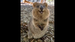 Cute and Funny Animal Video