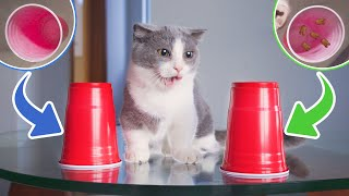 Funniest Snack Games To Prank Cats!