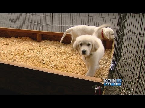 New Hope prison puppies program in Oregon
