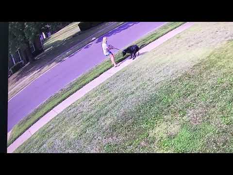 Neighbors dog pooping on sidewalk and leaving