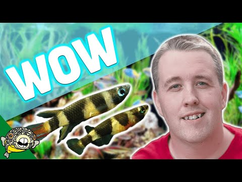 NO WATER CHANGES - Tropical Fish Store Tour. Over 25 years, no water changes!