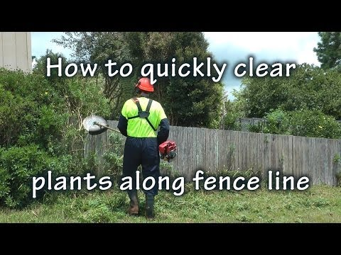 Clearing bushes Along Fence Line