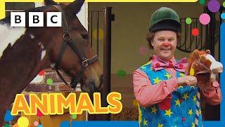 Mr Tumble Loves Animals! 🐴🦆🐶 | CBeebies +30 minutes