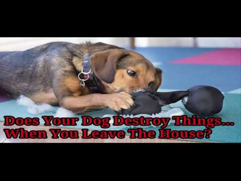 Cure Dog Separation Anxiety Tips | Free Tips For Curing Dog Separation Anxiety