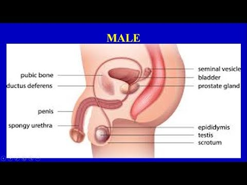 পুরুষ বন্ধ্যত্ব এবং শুক্রাণু সমস্যা। Male Infertility & Sperm Problems- Questions and Answers