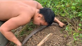 Primitive technology with survival skills Catch giant cobra (looking for food) snake hunting