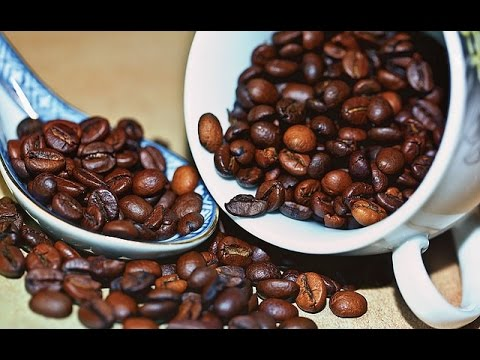 How to Grow your own Coffee