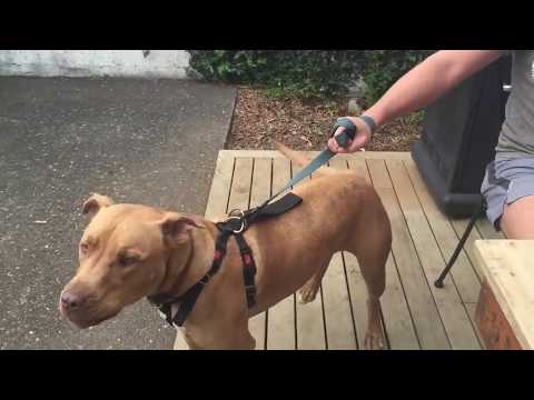 How to stop dog aggressive behavior towards people? Quickly and easily
