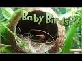 Bird Babies in the Coconut Nest?! • Pixel Biology Updates