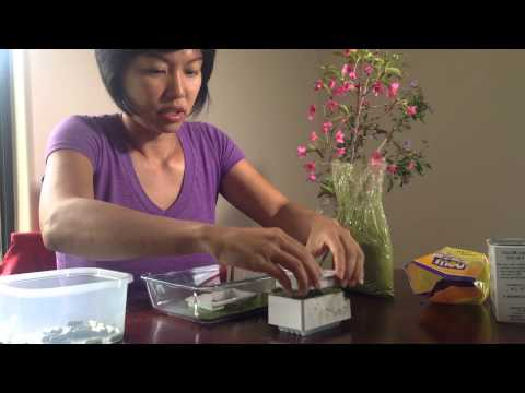 Make your own Moringa pill in less than 5 minutes with a Capsule Machine.