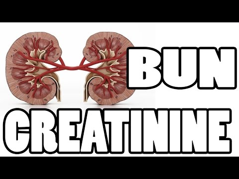 ✔✔✔ What is BUN and Creatinine - Kidney Function Test ✔✔✔