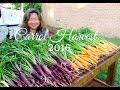 HD Carrot Harvest for 2016