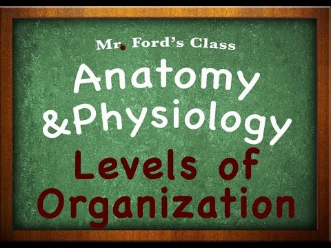 Introduction To Anatomy Physiology: Levels of Organization (01:03)