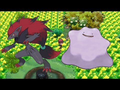 Pokemon X and Y - Where To Catch Zoroark and Ditto