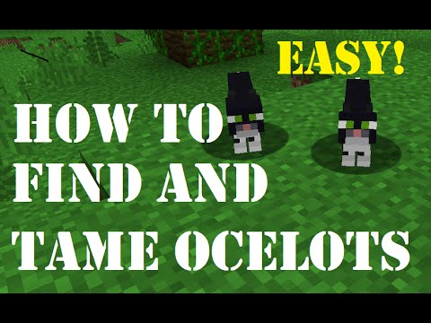How to find and tame ocelots