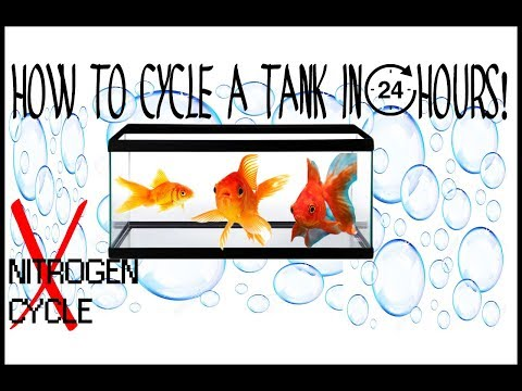 How to INSTANTLY CYCLE a fish tank! How to set up your 1st tank!