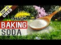 BAKING SODA IN GARDEN   TOP 10 Uses of Baking Soda Hacks in Gardening and Plants