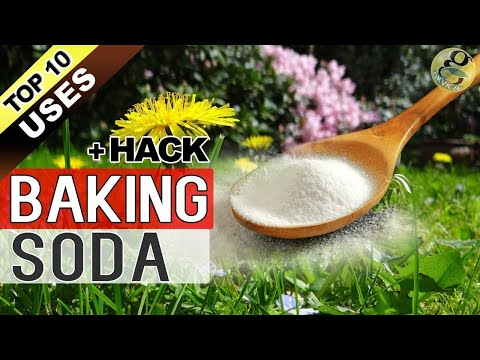BAKING SODA IN GARDEN | TOP 10 Uses of Baking Soda Hacks in Gardening and Plants