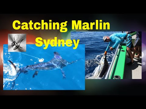 Catching Marlin Sydney | The Hook and The Cook