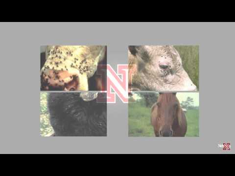 Fly Control on Pastured Cattle Dave Boxler April 2016